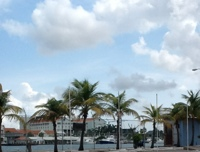 Palm trees and white cloud